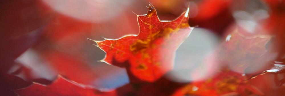 Cera trądzikowa jesienią - jak o nią zadbać?